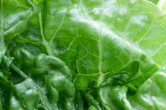 Struktur för bakgrund för vitamines för makro för grönsallatgrönsakveggie arkivfoto