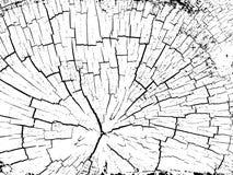 Struktur von Sprüngen des Holzes Stockfotografie
