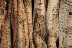 Struktura drzewo zdjęcie stock