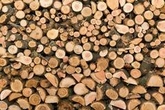Struktura drzewo w sekci Surowi materiały dla ogrzewać budynek mieszkalny Zdjęcie Royalty Free