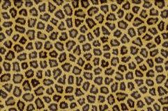 struktura futerkowa zwierząt Zdjęcia Royalty Free