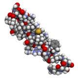Struktura jelitowy peptide, chemiczna struktura Zdjęcie Stock