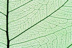 struktura liści,