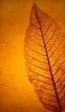 struktura liści, Obraz Stock