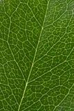 struktura liści, Zdjęcie Royalty Free