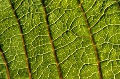 struktura liści, zdjęcia stock