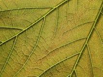 struktura liści, Zdjęcia Royalty Free