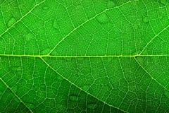 struktura liści, Fotografia Royalty Free