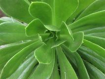 struktura organiczna zielona tła natury zdjęcia royalty free