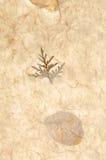 struktura papierowej Zdjęcie Royalty Free