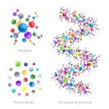 Struktura proteina, peptides, amino kwasy, wektor ilustracji