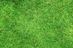 struktura trawy Fotografia Stock