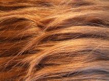 struktura włosów Fotografia Stock