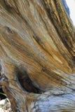 struktura woody Obrazy Royalty Free