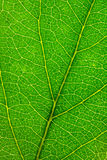 struktura zielonych liści zdjęcia stock
