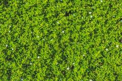 struktura zielonych liści Liść tekstury tło Obrazy Stock