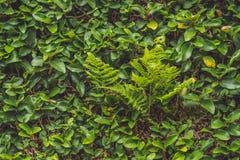 struktura zielonych liści Liść tekstury tło Zdjęcia Royalty Free