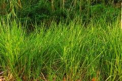 struktura zielonych liści zdjęcia royalty free