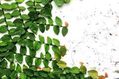 struktura zielonych liści Zdjęcie Stock