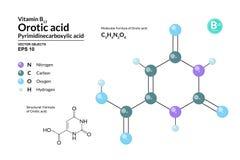 Strukturell kemisk molekylär formel och modell av Orotic syra Atomer föreställs som sfärer med att kodifiera för färg royaltyfri illustrationer