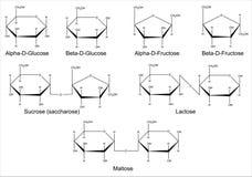 Strukturella formler av de huvudsakliga saccharidesna Arkivfoto