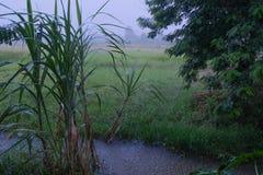 Strukturella kännetecken av regnfält ¹ ric Mesnard för FrÐ ¹dÐ Laboratoire de Fysik de l `-Atmosphe ` beträffande Tropicale royaltyfri fotografi