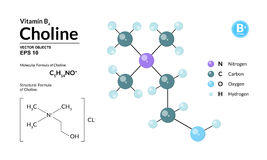 Strukturelle chemische molekulare Formel und Modell des Cholins Atome werden als Bereiche mit Farbkennzeichnung dargestellt Vektor Abbildung