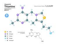 Strukturelle chemische molekulare Formel und Modell des Thiamins Atome werden als Bereiche mit Farbkennzeichnung dargestellt Lizenzfreie Abbildung