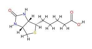 Strukturelle Formel des Biotins Stockbild