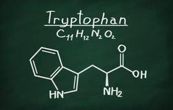 Strukturelles Modell des Tryptophans Lizenzfreie Stockbilder