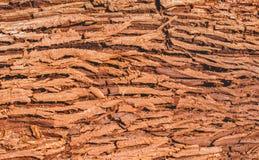 Strukturen av det bruna tjocka skället av ett träd royaltyfri foto