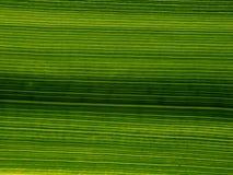 Strukturen der Natur Lizenzfreie Stockfotos