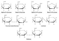 Strukturformeln der Hauptsaccharide Stockfoto