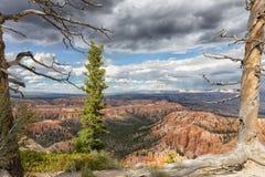 Strukturierte Bäume und bewölkte Himmel mit Ansicht von Grand Canyon lizenzfreie stockfotos