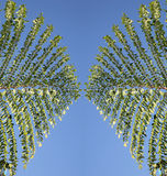 Strukturierte Blätter Stockfotos