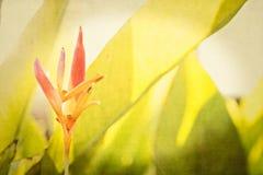 Strukturierte Blumenhintergründe von einem Garten in Mexiko Lizenzfreie Stockfotos
