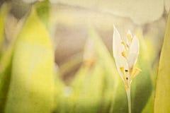 Strukturierte Blumenhintergründe von einem Garten in Mexiko Stockfotos
