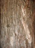 Strukturierte Hintergründe der Natur Stockbild