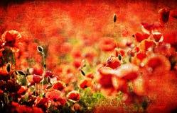 Strukturierte Mohnblumen Stockbild