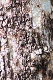 Strukturierte und Schalenbaumrinde Wiederholen des Musters Lizenzfreie Stockbilder