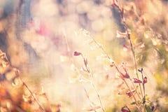 Strukturierter Blumenhintergrund Stockfotos