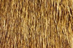 Strukturierter Hintergrund des goldenen Strohs Stockbilder