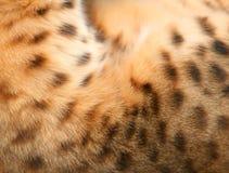 Strukturierter Hintergrund des Tierpelzes Lizenzfreie Stockbilder