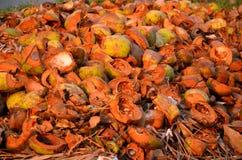 Strukturierter Hintergrund von braunen Kokosnüssen in subrise Sonne Lizenzfreie Stockfotografie