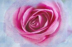 Strukturierter Schmutzhintergrund mit der einzelnen Rotrosenknospe Rosafarbener Hintergrund des Auszuges Stockbild