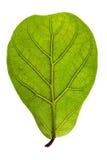 Strukturiertes grünes Blatt Lizenzfreies Stockfoto