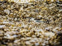 Struma rzeczny piasek, Bułgaria Zdjęcie Stock