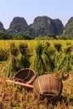 Strumenti del coltivatore su un campo di granulo Fotografia Stock Libera da Diritti