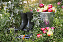 Strumenti del giardiniere e concetto di giardinaggio di hobby di svago Fotografie Stock Libere da Diritti