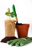 Strumenti di giardinaggio Fotografia Stock Libera da Diritti